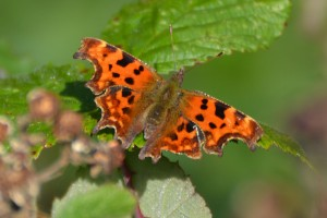 comma cropped_edited-1