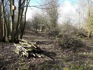 Glade creation and log pile habitat